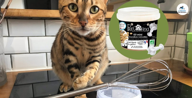 Test produit : faites plaisir à votre chat avec le kit de mini friandises PetCooking