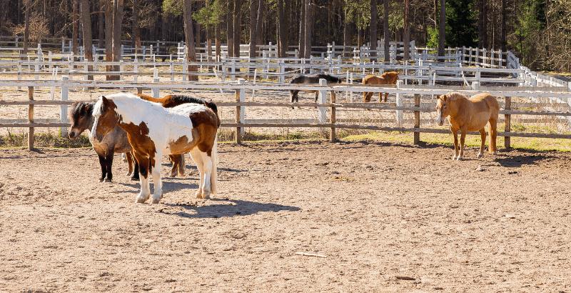 Comment réussir la mise au pré de son cheval ?