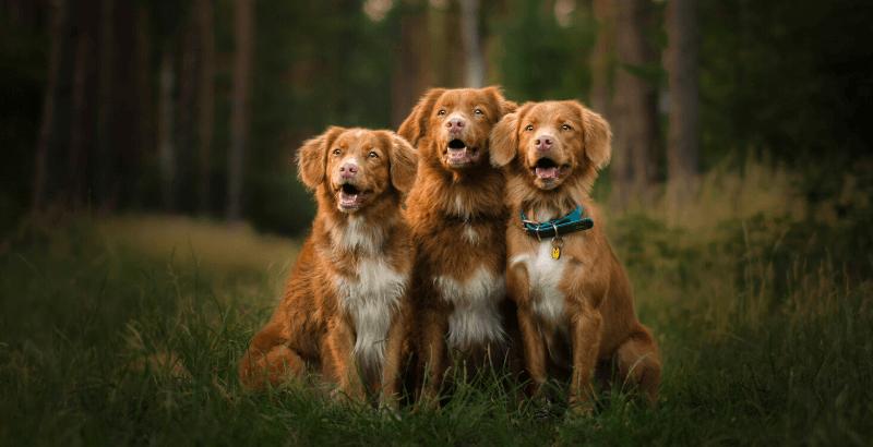Comment protéger son chien de la maladie de Lyme ?