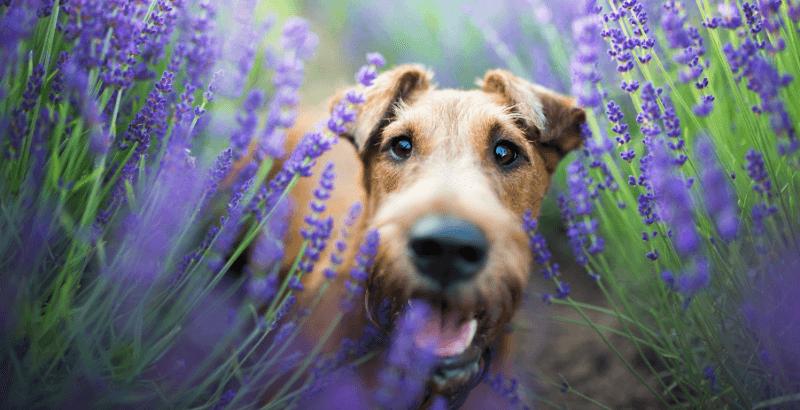 Aidez votre animal avec les plantes de la gamme Dogteur Phyto