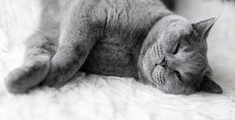 Comment aider son chat à surmonter des situations stressantes avec Zylkène ?