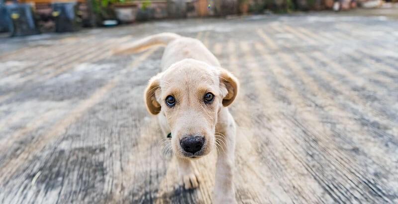 Ce que vous ne saviez peut-être pas sur les chiens