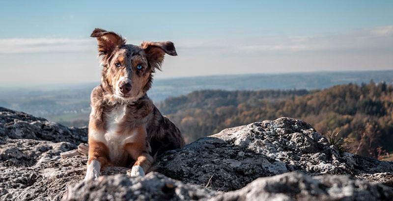 Faut-il donner des vitamines à son chien ?