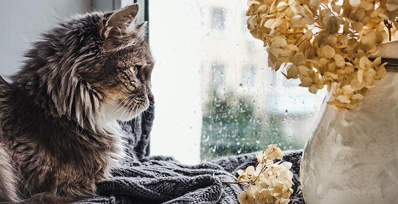 Vrai ou Faux : Un chat est plus solitaire qu'un chien
