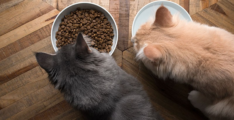 Quels compléments alimentaires choisir pour son animal ?