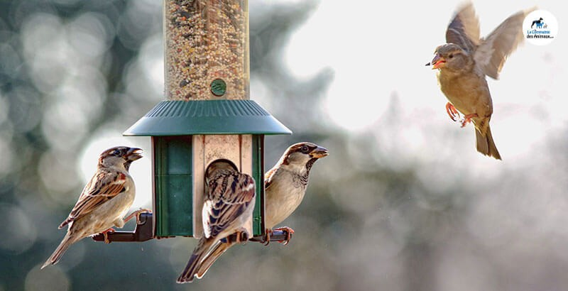 Transformer son jardin en refuge pour oiseaux