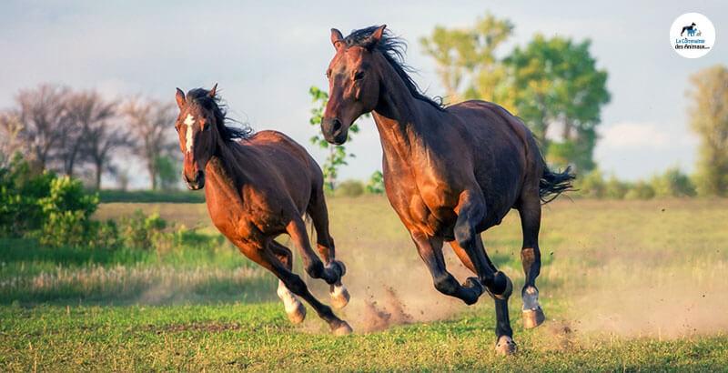 Préserver les articulations des chevaux