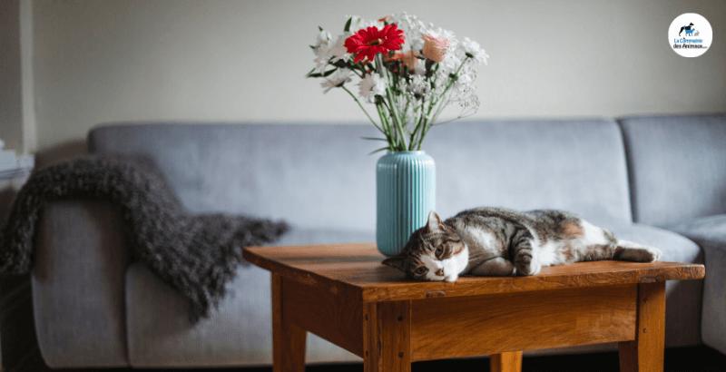 On a testé : Zensylk anti-stress pour chat