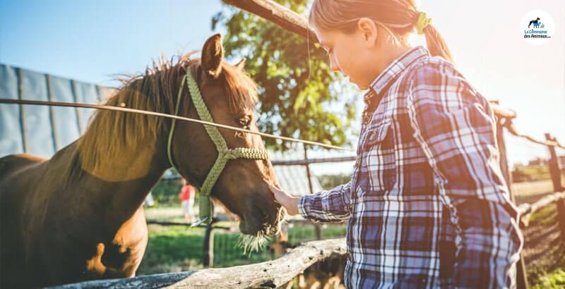 Quelles friandises choisir pour son cheval ?