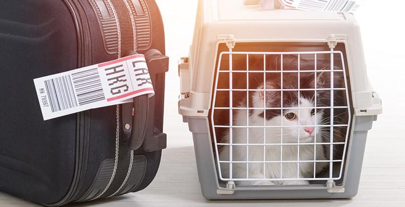 Chat et vacances : préparer le départ ou l'arrivée !