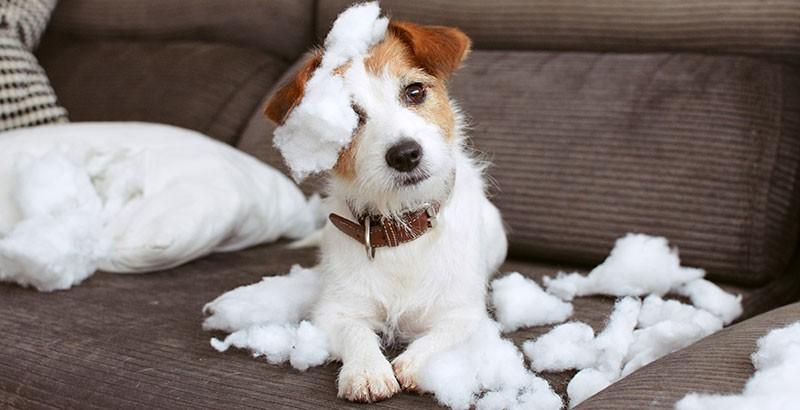Votre chien a-t-il des comportements anormaux ?