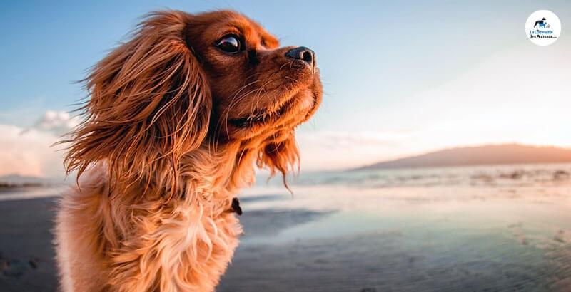 Apprendre un sport nautique à son chien