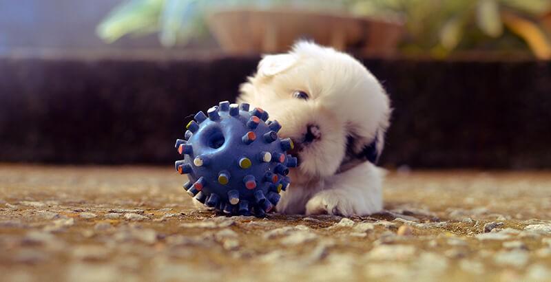 Quels sont les jouets sans danger pour son animal ?