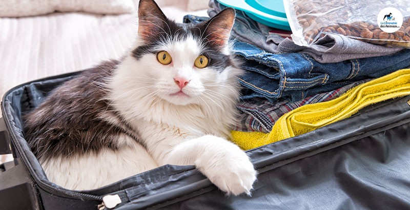Nos astuces pour bien voyager avec son chat