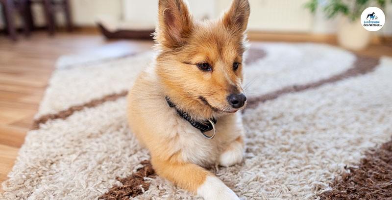 J'adopte un chien : Que faire avant, le jour J et dans les jours qui suivent ?