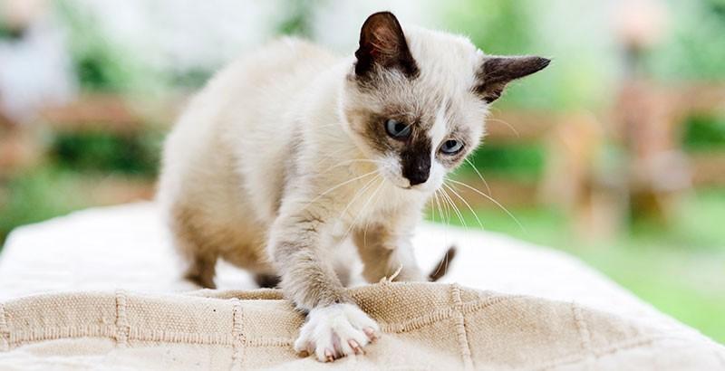 Mon chaton me griffe et me mord : pourquoi ?