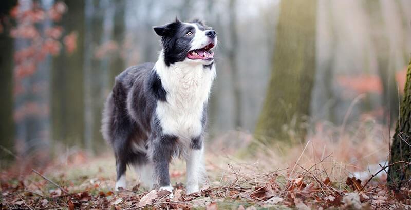 Recrudescence de la Parvovirose canine : soyez vigilant !