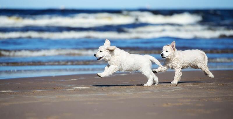 Cet été, protégez votre chien avec une crème solaire !