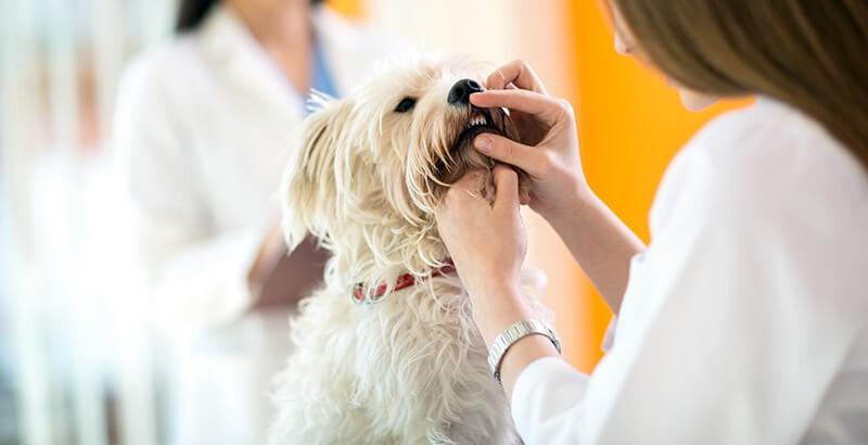 Quiz : 10 questions sur l'hygiène bucco-dentaire de votre animal
