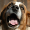 Vetpen : L'allié des chiens diabétiques