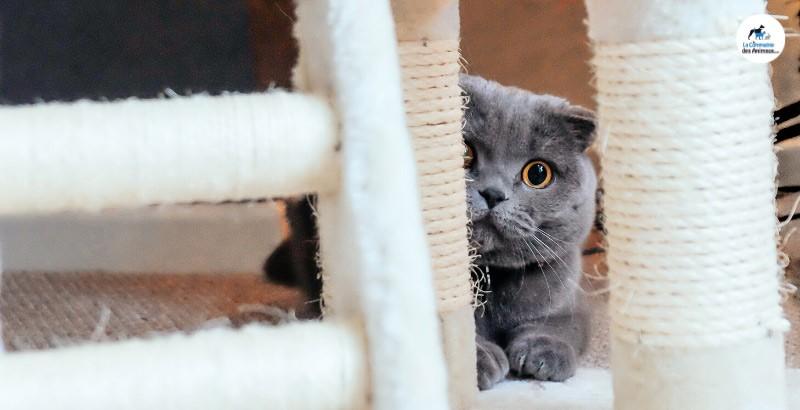 Comment apaiser et soigner un chat stressé ?