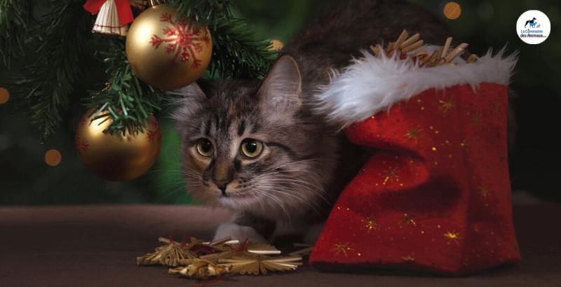 Comment bien préparer les fêtes de fin d'année pour son chat ?