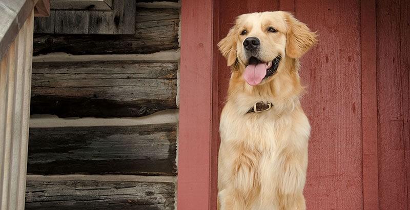 Mon chien maigrit, que faire ?