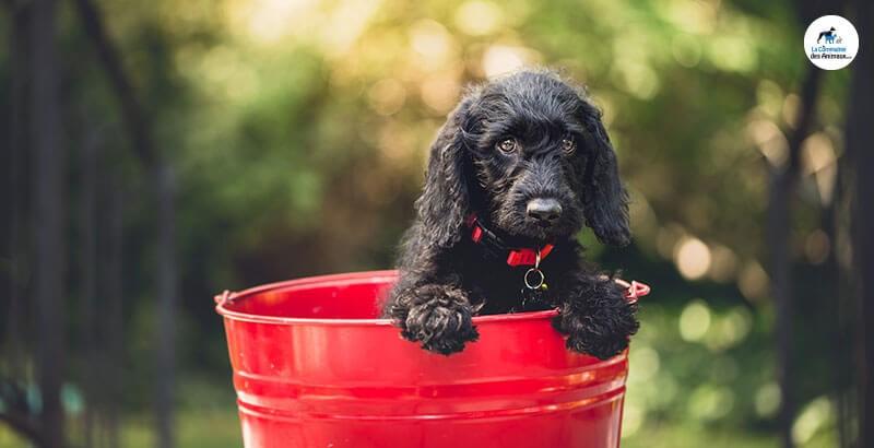 Vrai ou Faux : Le chien ne voit pas les couleurs