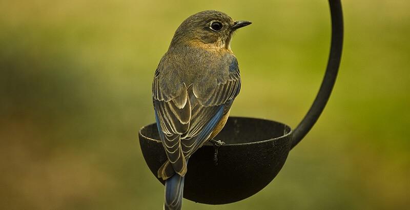 Que faire face à un oiseau blessé ?