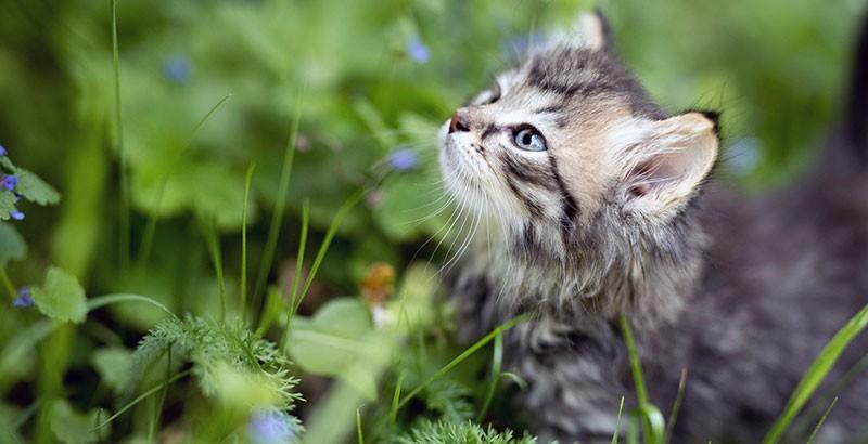 Faut-il vermifuger son chaton ?