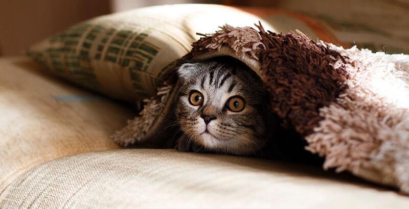 Qu'est-ce qu'un chat qui pleure ?