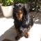 Interview - Mon chien est un Teckel