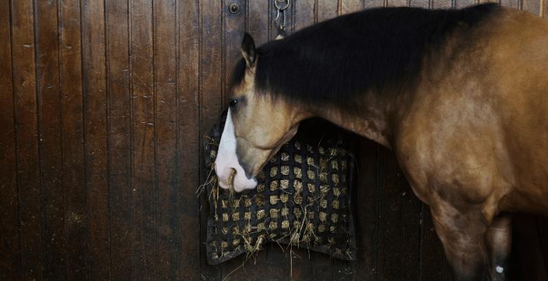 Comment combattre l'ennui du cheval au box ?