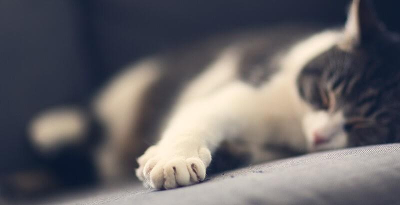 Comment prendre soin des griffes de son chat ?
