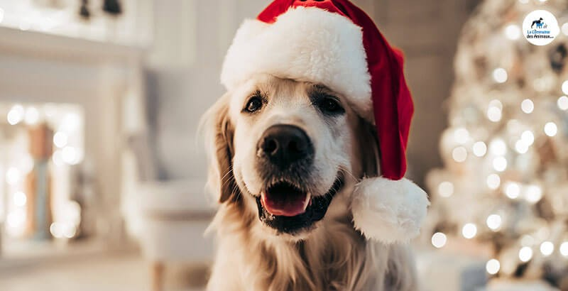 Quel repas de Noël pour mon chat ou mon chien ?