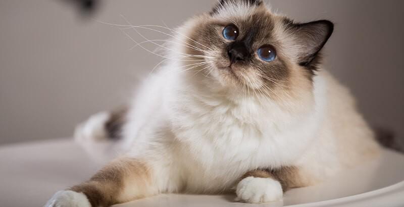 On a testé : La nouvelle gamme SPECIFIC pour chat