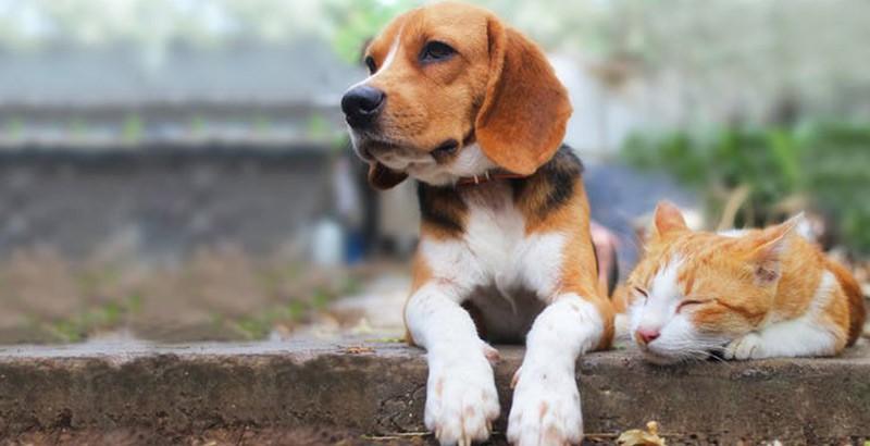 Comment favoriser une bonne cohabitation entre chien et chat ?