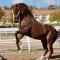 Que faire face à un cheval qui se cabre ?