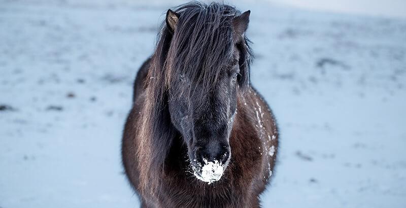 Faut-il tondre son cheval en hiver ?