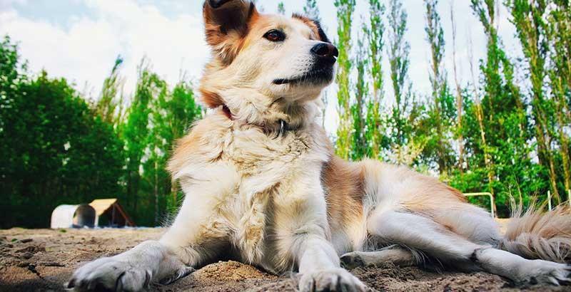 Mon chien aboie sans cesse : que faire ?