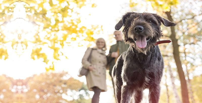 Quiz : Votre chien connait-il les codes de son espèce ?