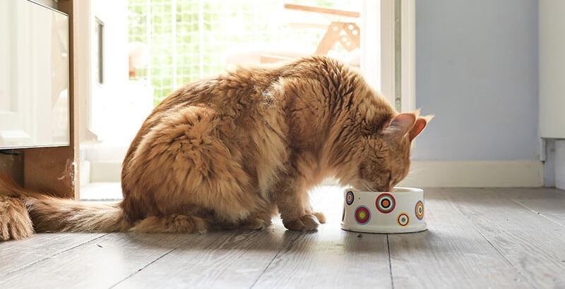 Les croquettes hypoallergéniques pour chat