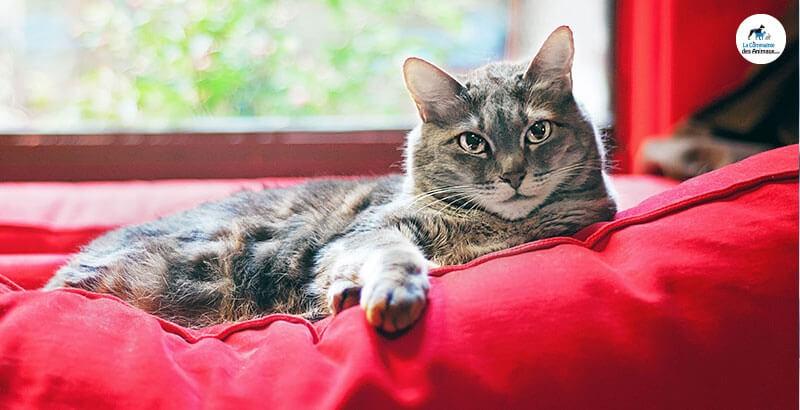 Vrai ou Faux : Les chats peuvent avoir des pellicules