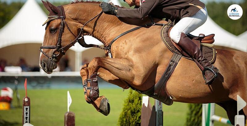 Connaître le dos de son cheval