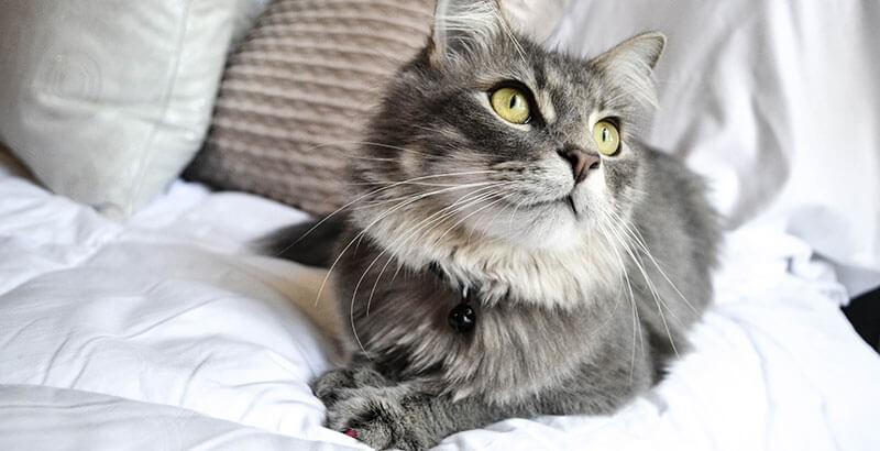 Vrai ou Faux : Qui dit moustache haute, dit chat en bonne santé !