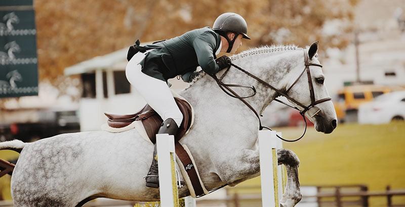 Le confort respiratoire des chevaux avec Phyto Respir
