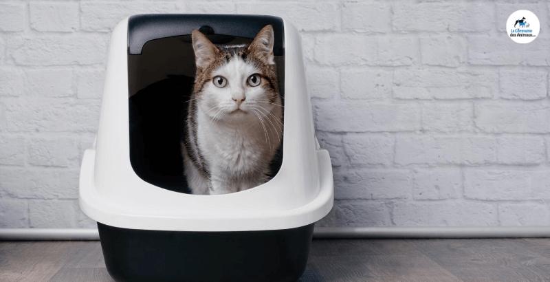 Comment se débarrasser des odeurs de litière ?