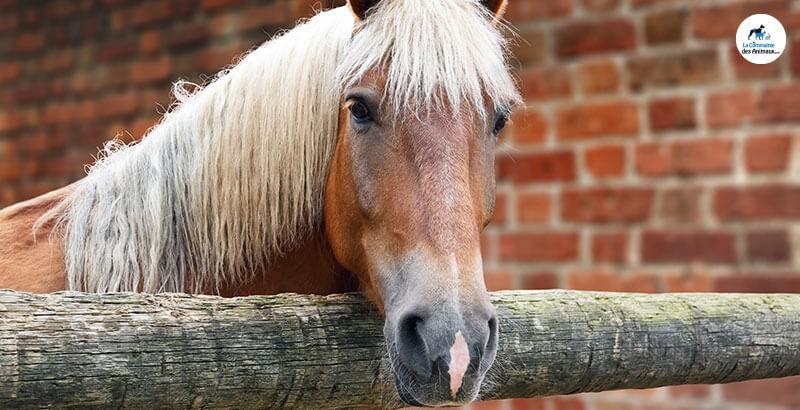 Nos solutions anti-mouches et moustiques pour chevaux