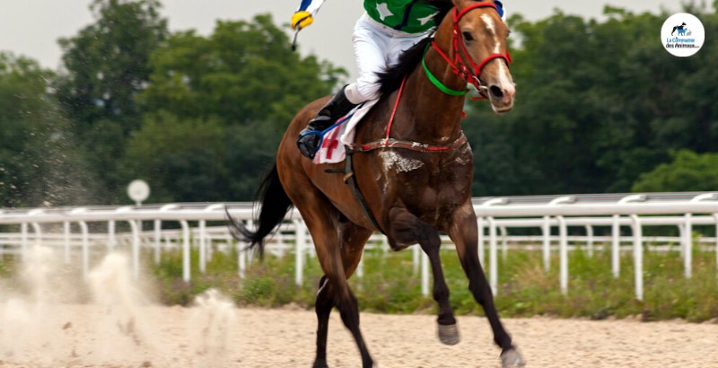Protégez vos chevaux des ulcères gastriques avec Gastric Gel