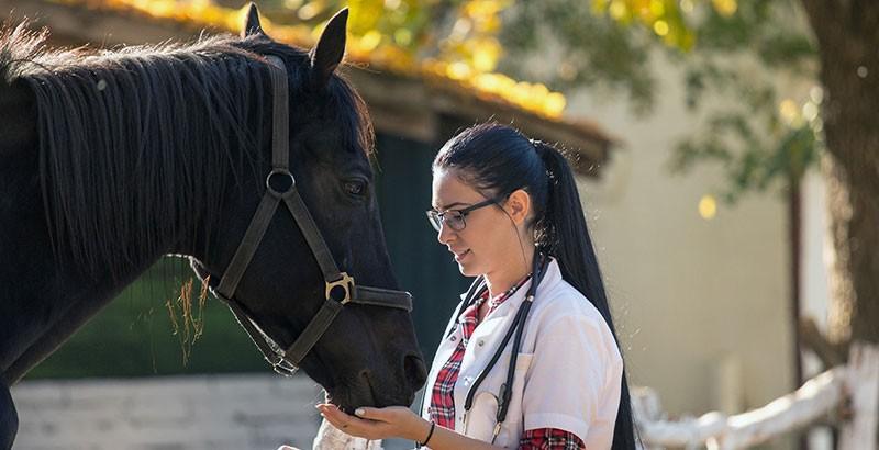 Surveiller la température de son cheval